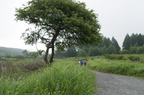 八島湿原から沢渡へ.jpg