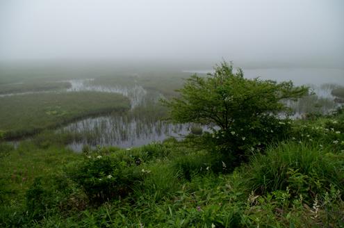 八島湿原池.jpg